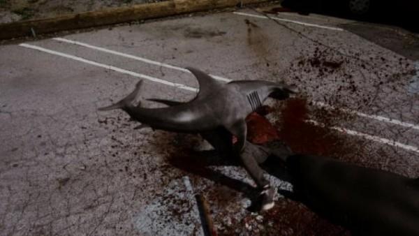 shark-on-the-parking-lot-600x338
